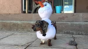 funny dog olaf costume