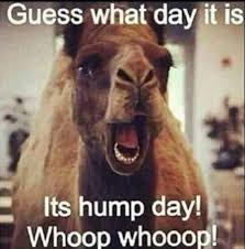 Happy Hump Day Memes - happy hump day vibes yet another wednesday pmslweb