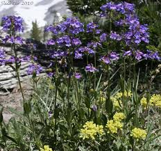 218 best native plants images plant lists for oregon oregon wildflower lists