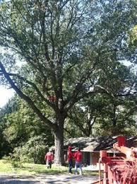 počet nápadov na tému tree trimming service na pintereste 17