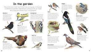 Magpie Birds In Backyards My First Encylopedia Of Birds A First Encyclopedia With Supersize