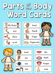 body parts picture word cards prekinders