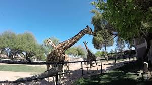 Zoo Lights Tucson Az by Reid Park Zoo Tucson Az Youtube