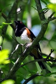 45 best birds of ohio winter images on pinterest ohio birds and