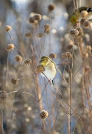 native plants for birds to help birds this winter go easy on fall yard work audubon