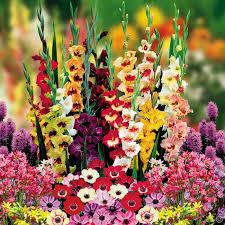 florists favorite garden 200 flower bulbs buy order now