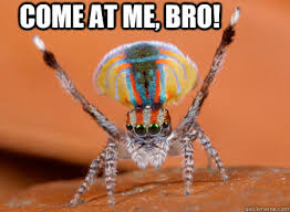 Spider Bro Meme - funny jumping spider memes jumping best of the funny meme
