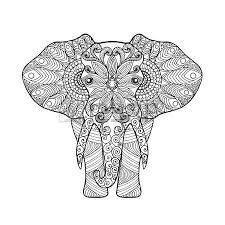 elephant head images u0026 stock pictures royalty free elephant head