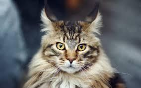imagenes abstractas hd de animales gatos abstractos animales fondos de pantalla gratis