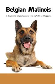 belgian malinois en espanol how to train and understand your belgian malinois puppy and dog by