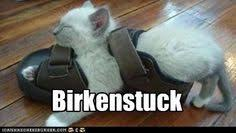 Birkenstock Meme - the ka tet cantina 2 page 115 the stephenking com message board