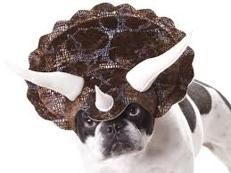 Halloween Costumes English Bulldogs 14 Halloween Costumes Dogs