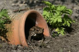 how to attract toads to the garden turning the clock back