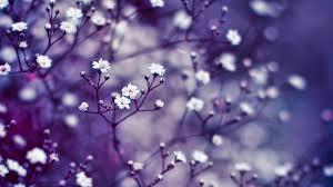 Flower Wallpaper Flower Wallpapers White Buds Hd Desktop Wallpapers 4k Hd