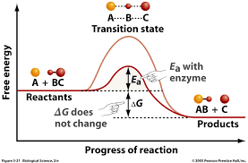 why do enzymes have such a higher affinity for transition state
