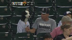 bark at the park at u s cellular