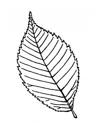 leaf outline clipart leaf template clipartpost