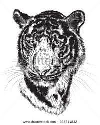 sketch tiger picture file jpeg stock illustration 114352414