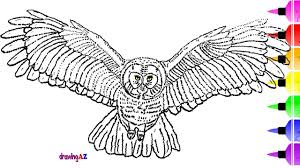 how to draw an owl and owl coloring page for kids u0026 shark