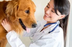 dog daycare floor plans westview veterinary hospital inc veterinarian in fremont oh