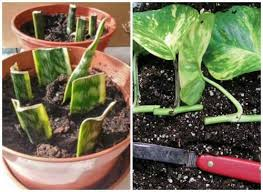 232 best houseplants images on pinterest green plants house
