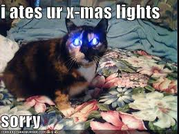 Cat Christmas Meme - funny cat christmas pictures happy holidays