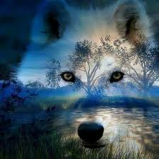pin by carrie sponaugle on wolves wolf and