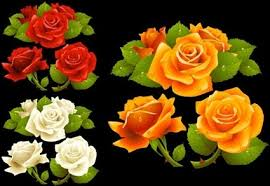 wallpaper bunga warna orange rose cdr free vector download 2 616 free vector for commercial use