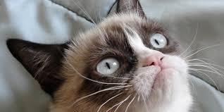Grumpy Cat Memes Christmas - grumpy cat to save christmas with new lifetime movie