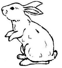 coloring alluring drawings rabbits polish rabbit
