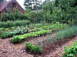 Design A Garden Layout Best Garden Layout Design Raised Bed Gardens Raised Beds Garden