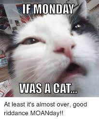 Monday Cat Meme - if monday was a cat at least it s almost over good riddance