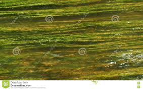 imagenes hermosas que se mueben las plantas subacuáticas hermosas se mueven en corriente del agua de