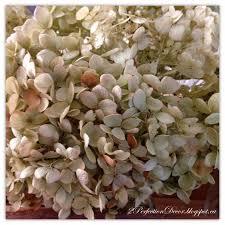 Dried Hydrangeas 2perfection Decor Decorating With Dried Hydrangeas