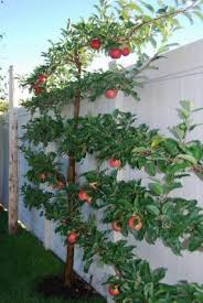 Best Trees For Backyard by 8 Best Tree For Zone 5 B Images On Pinterest Fast Growing Trees