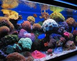 led reef lighting reviews 10 best led lighting for reef tanks 2018 reviews guide