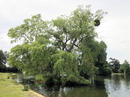 plant trees in wet areas using water loving trees in poor