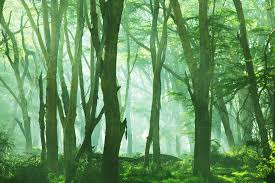 misty forest scene wallpaper wall mural muralswallpaper co uk