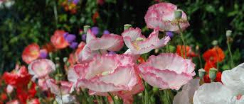 san diego native plants list explore gardens balboa park