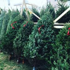 christmas tree sale maine farmer travels 200 to sell wares christmas trees