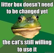 Funny Frog Meme - funny bachelor frog meme 30 pics