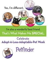 Dogs For The Blind Adoption Less Adoptable Pets Petfinder Members