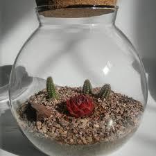 cork lid succulent terrarium u2022 cactus terrarium for sale u2022 glass