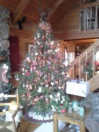100 canaan fir good christmas tree best christmas tree