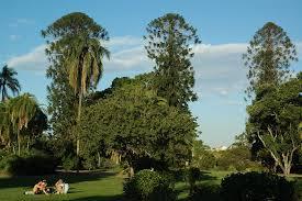 Botanic Gardens Brisbane City City Botanic Gardens Cbd Brisbane Parks Mdb