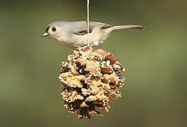 Backyard Birds Utah Creative Ways To Care For Your Backyard Birds One Good Thing By