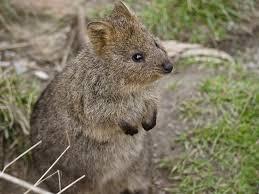 imagenes animales australia los mejores países para los amantes de los animales australia