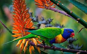 wallpaper 4k color multi color parrot wallpaper animals wallpaper better
