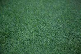 ingrosso tappeti ingrosso tappeti moquette gallo distribuzioni cis nolagallo
