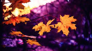 free stock photo of autumn autumn leaf autumn leaves